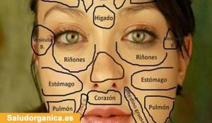 Como leer el rostro: Mapa de la cara revela cuando un órgano del cuerpo tiene algún desequilibro