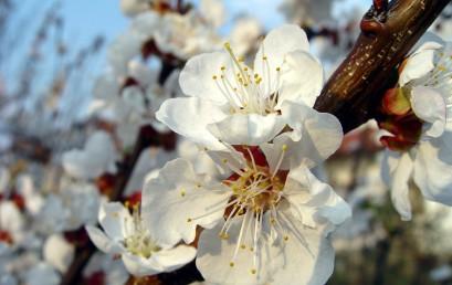 Nuevos Enfoques de los Remedios Florales del Dr. Bach