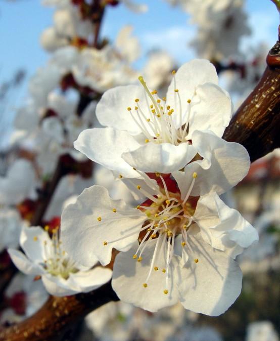 Nous Enfocaments dels Remeis Florals del Dr. Bach
